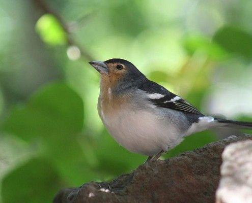 vogels-lapalma