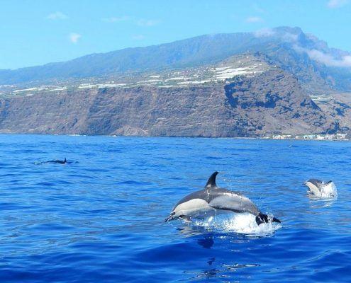 dolfijnen.boot.lapalma