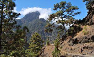 caldera-uitheemse-vegetatie-dreiging-flora