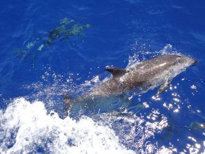 dolfijnen la palma