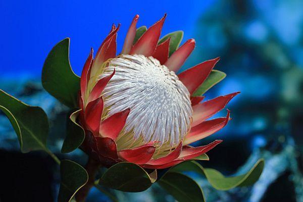 bloemen van la palma